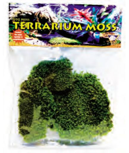 artificial-plants-for-reptiles-t-rex-frog-moss